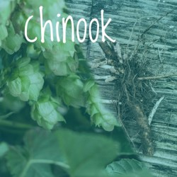 Chinook Hop 2018 Rhizome