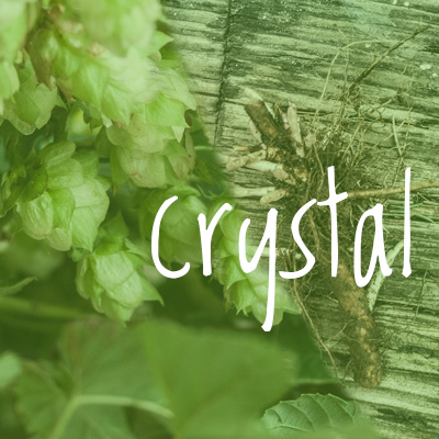 Crystal Hop 2018 Rhizome