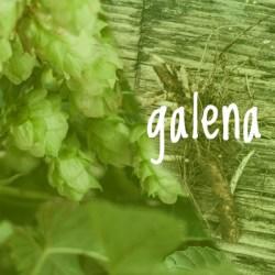 Galena Hop 2018 Rhizome