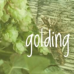 Golding Hop 2018 Rhizome