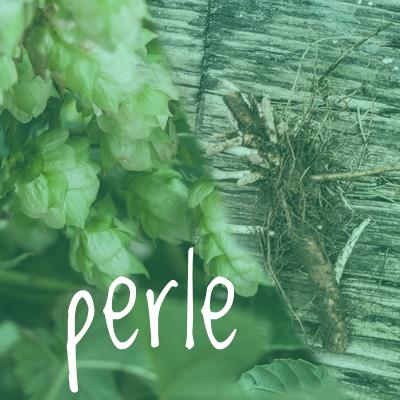 Perle Hop 2018 Rhizome