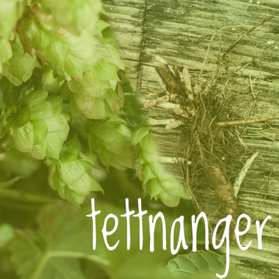 Tettnanger Hop 2018 Rhizome