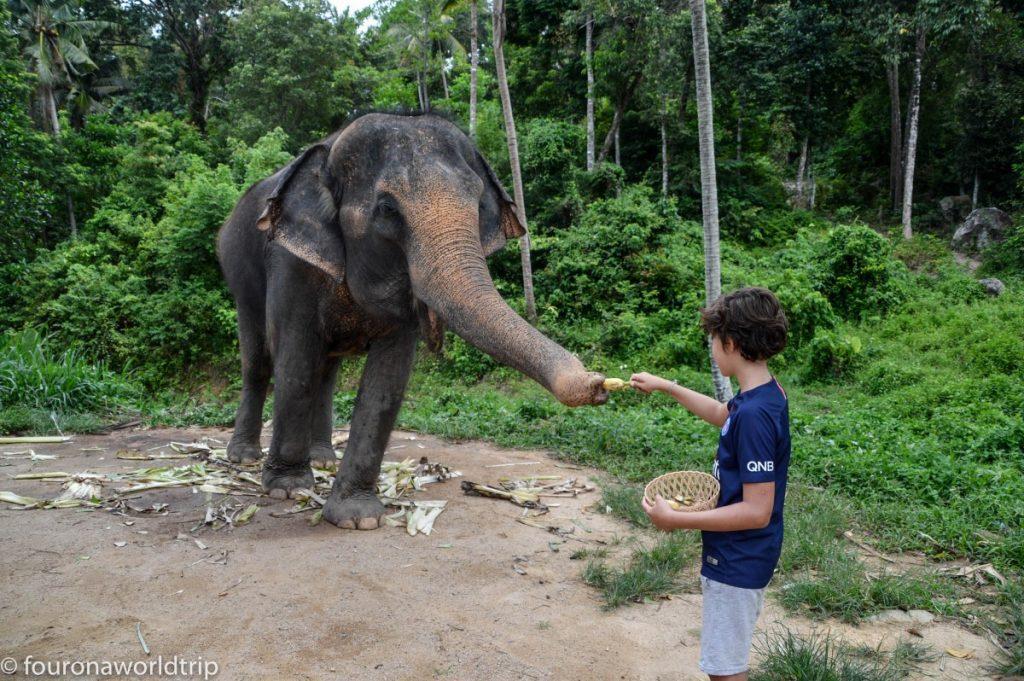 Elefants on Koh Phangan - what to do on Koh PHangan with kids