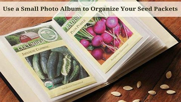 Innovative Living - Organizing Seeds