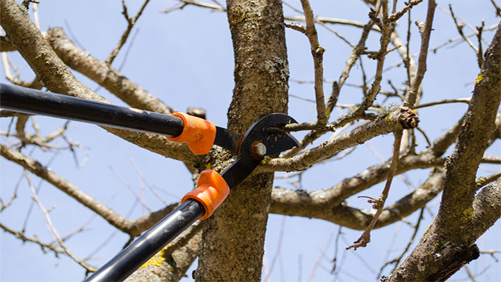 Innovative Living - Pruning Trees and Shrubs