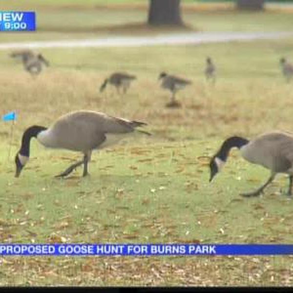 Burns Park proposes goose hunt_-9046890365536353371