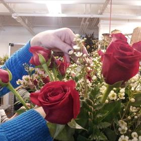 Roses_-4985109066772690660