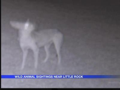 Wild animal sightings_1282311345970499433