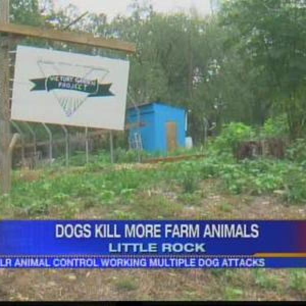 Dogs kill more farm animals_-7705271203367205726