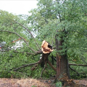 Bradley County Storm Damage_-7813950773982575322