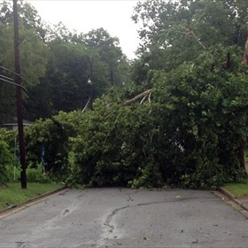 tree down in 1200 blk of 26th Street_8926718433478984228