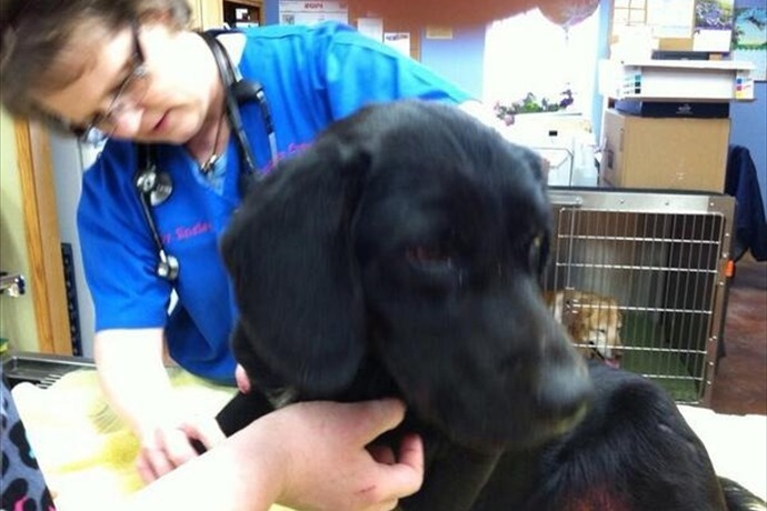 Abused Dog in Bella Vista_5323102292662569676