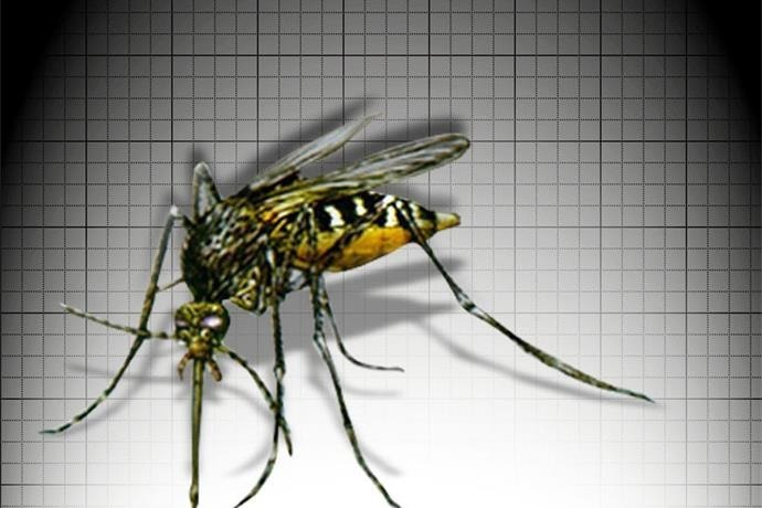 mosquitoes_5290078627507683346