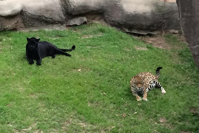jaguars_1177137310159750626