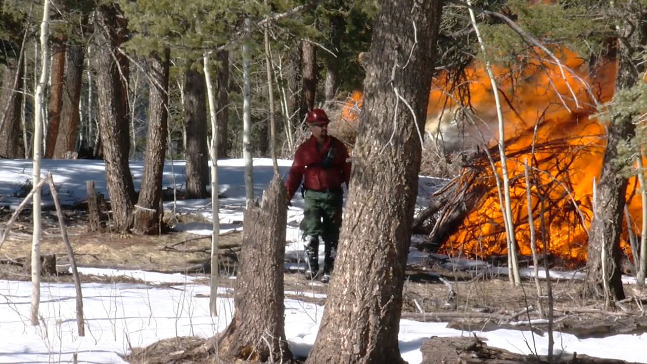A Forest Service employee burning slash piles near Beulah in February. Mike Duran - FOX21 News 2