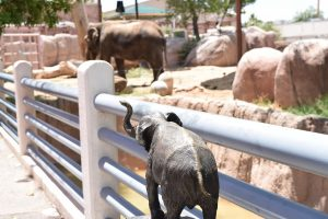 The Top Four Zoos In Texas