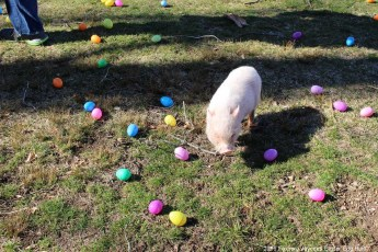 2016-easter-egg-hunt-5015