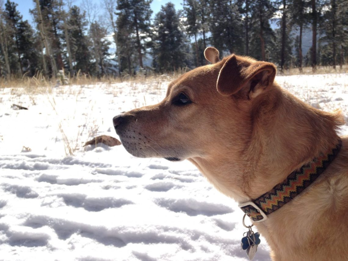 snowshoeing with a dog - sunny day