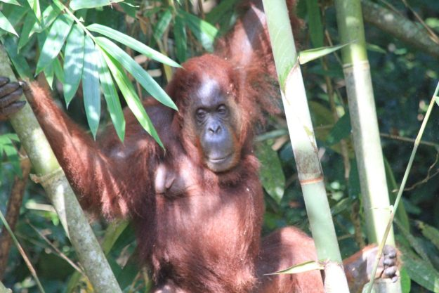 Liebster Award - Discovering Borneo