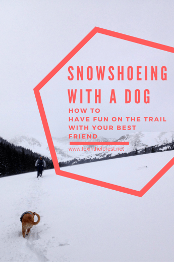 Snowshoe with a dog - Pin me