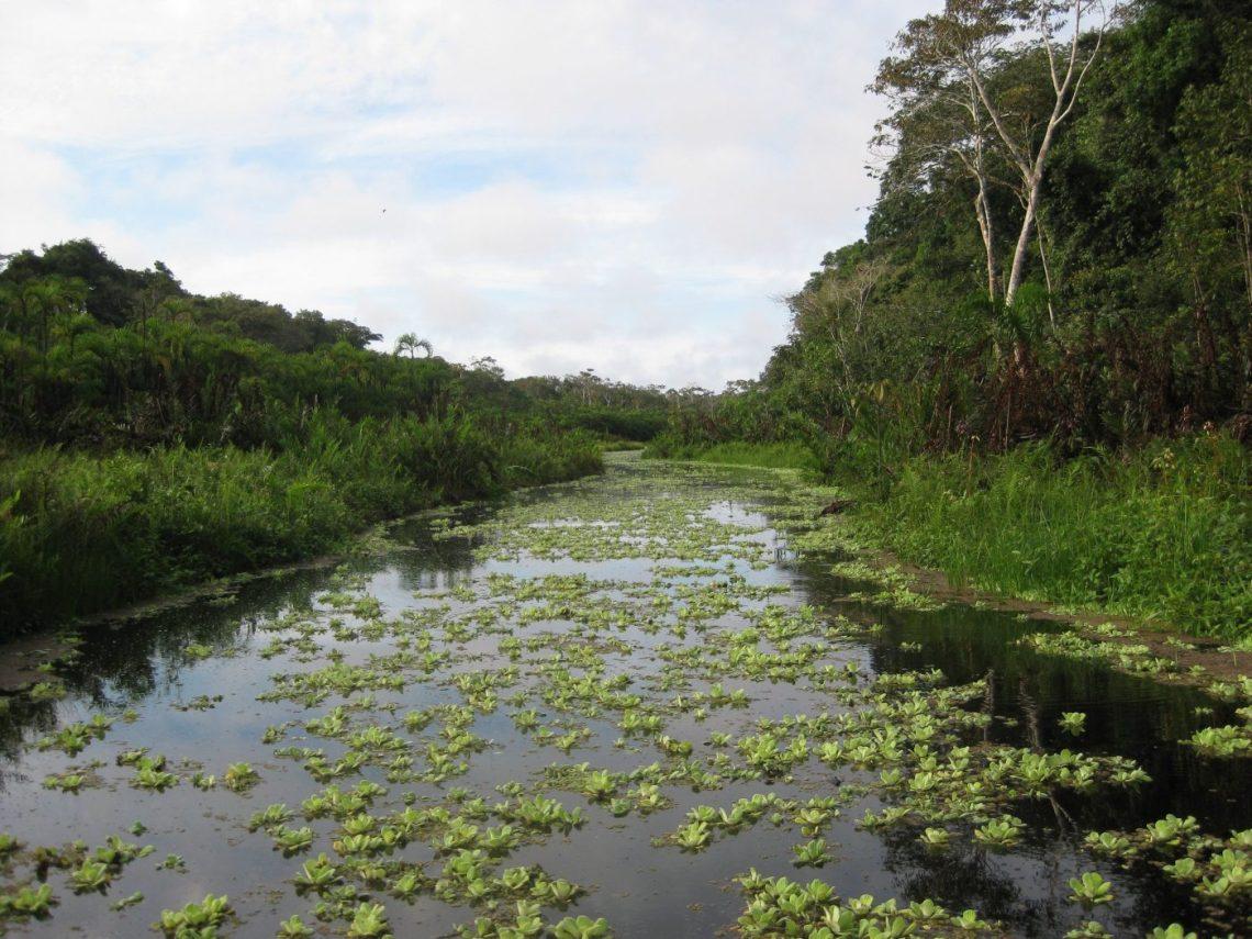 Explore the jungles of peru
