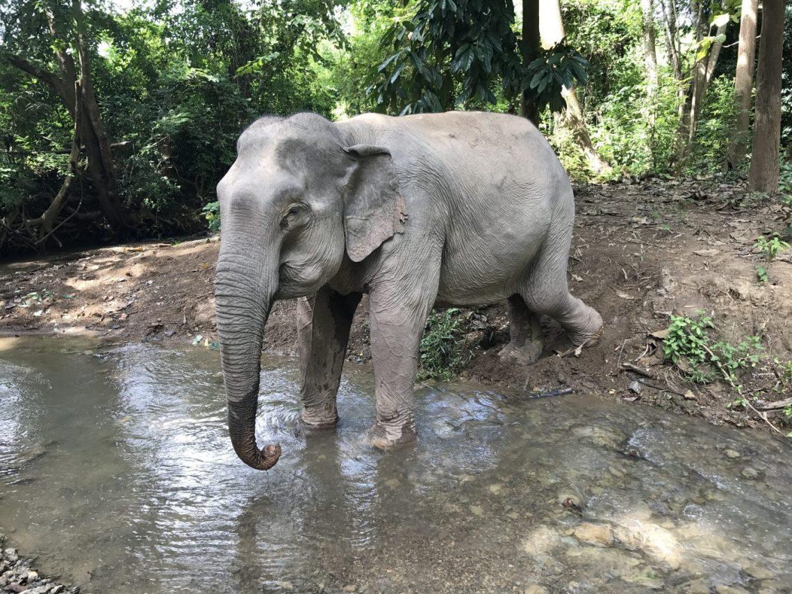 Luang Prabang Ethical Elephant experience