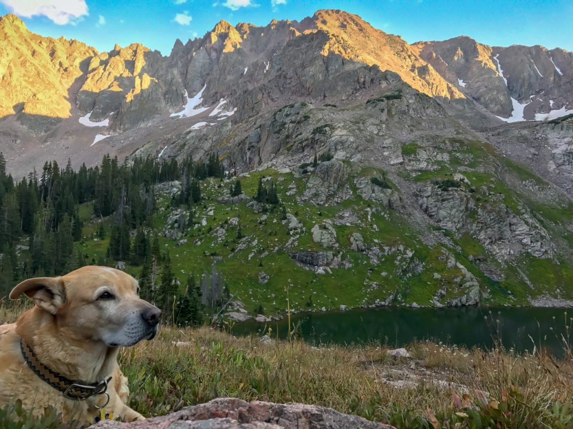 how to take your dog backpacking