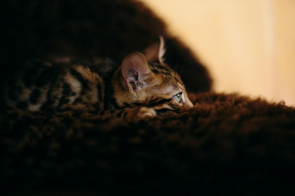 Homestory • Im Hause der Katzen