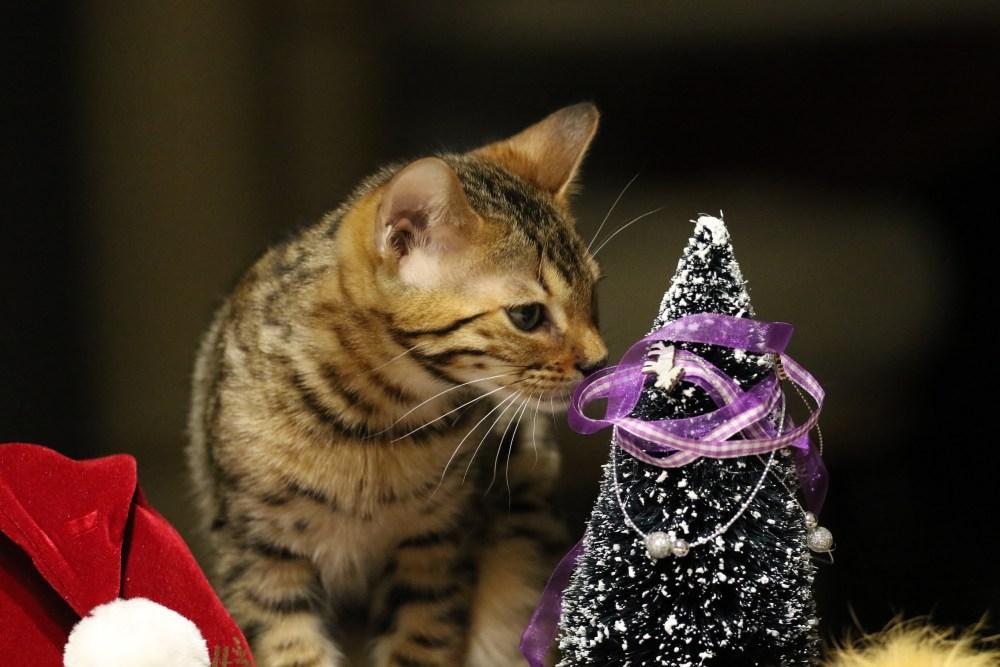 Freddy Van Dyke wünscht Frohe Weihnachtstage