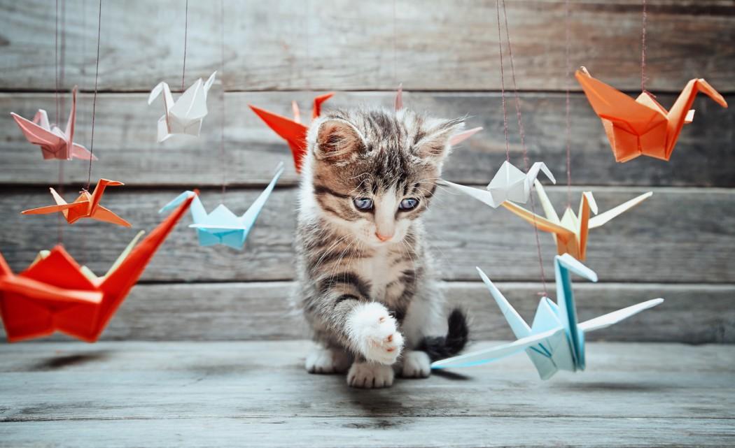 Les startups, c'est petit, c'est mignon, mais c'est comme les chatons, faut pas que ça grandisse
