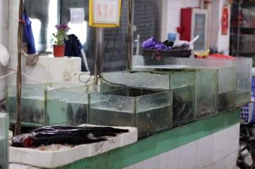 china-urlaub-erfahrungen-beijing-cooking-school-33