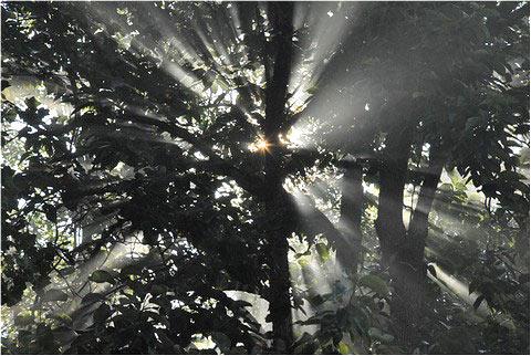 Morning Woods