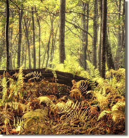 Autumn Scene on the Blue Ridge Parkway, Floyd County Virginia
