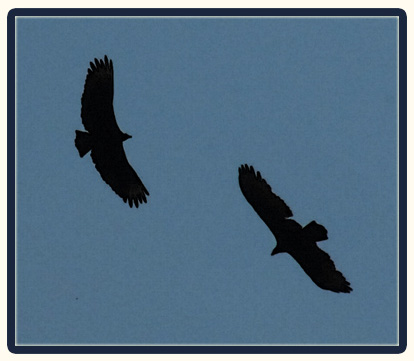 Ravens over Goose Creek / Floyd County, Virginia