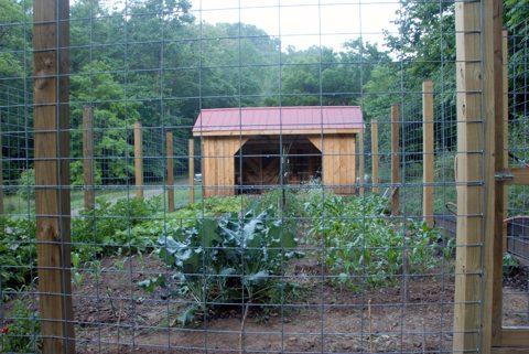 june_garden.jpg