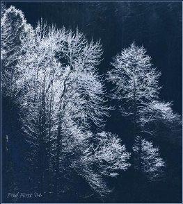 treefrost5.jpg