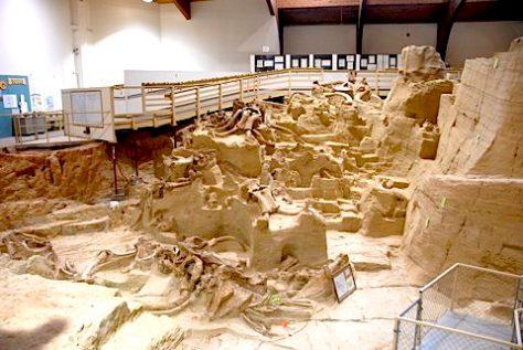 Bones lie just where the animals died 20K yrs ago