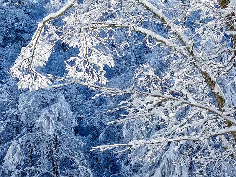 Snows of Narnia