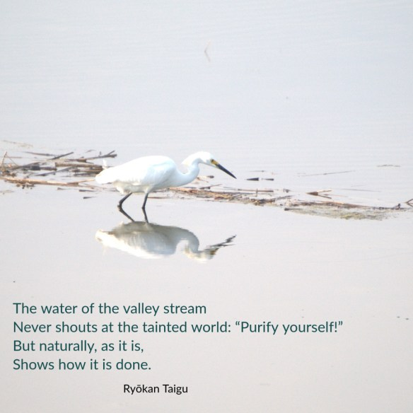 "The water of the valley stream Never shouts at the tainted world: ""Purify yourself!"" But naturally, as it is, Shows how it is done. Ryōkan Taigu"