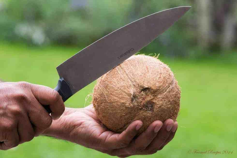 DSC_9354_Coconut_2
