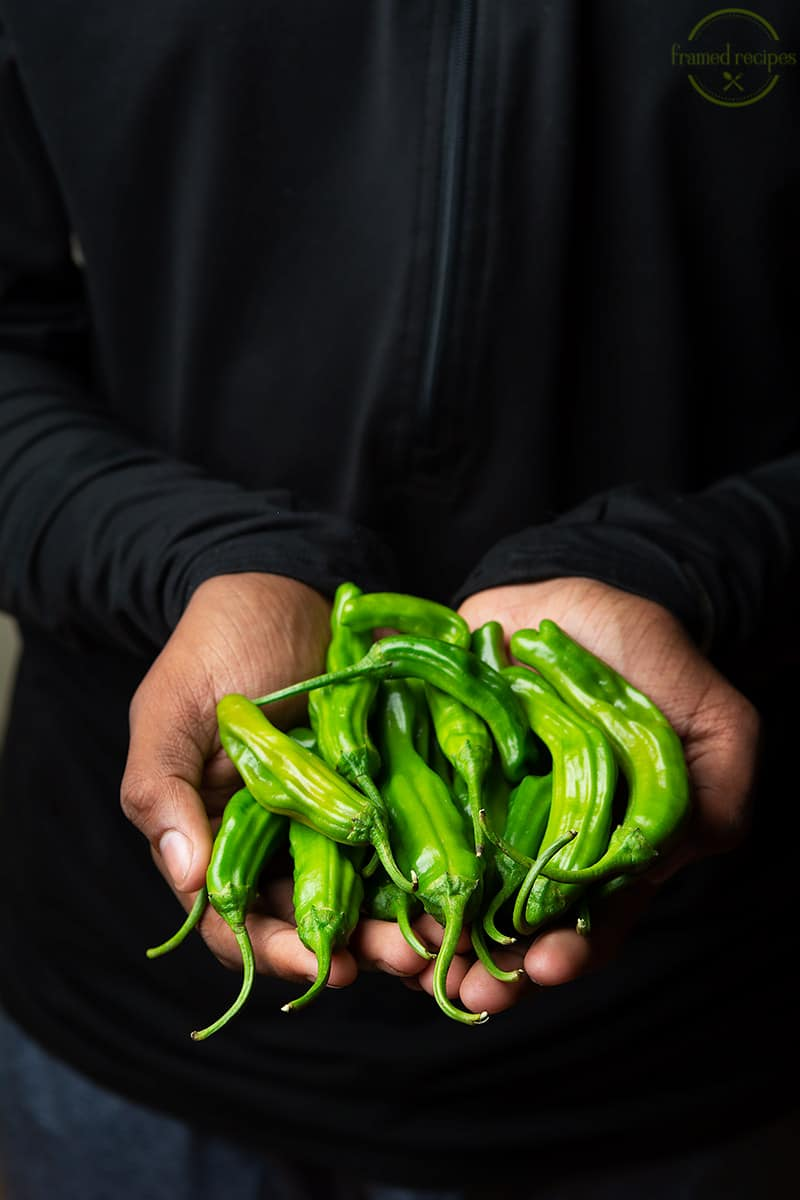 holding shishito peppers in hand