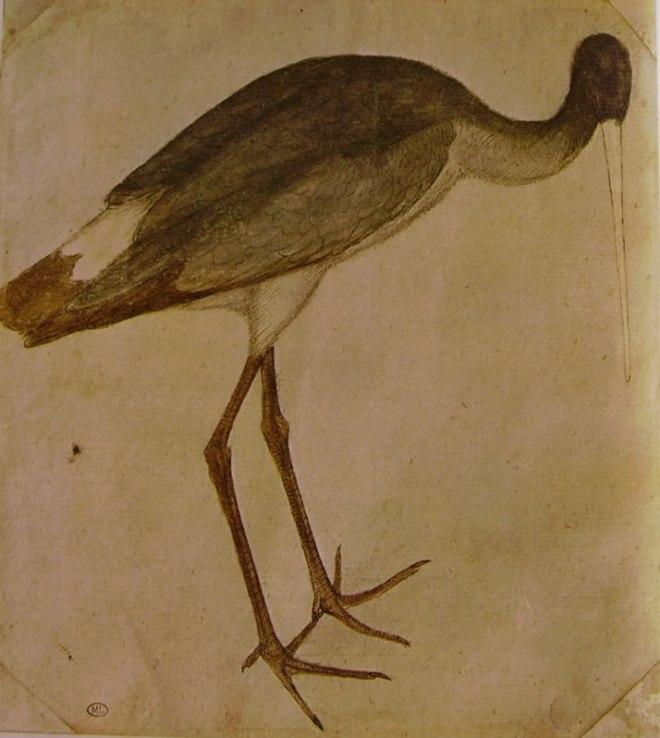 Pisanello: Cicogna
