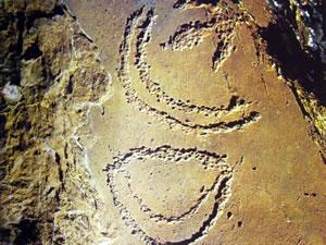 Ideogrammi nelle incisioni rupestri (XII-V millennio a.C. Sud Australia