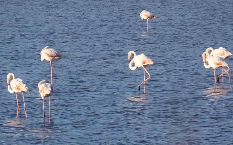 La laguna popolata di fenicotteri
