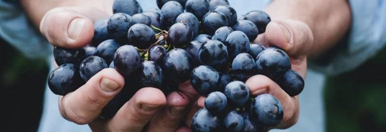 Le strade del vino in Lombardia da scoprire e assaporare lentamente