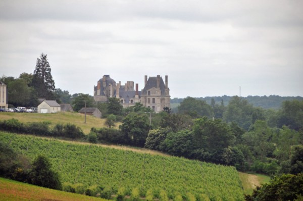 Saumur Vineyards