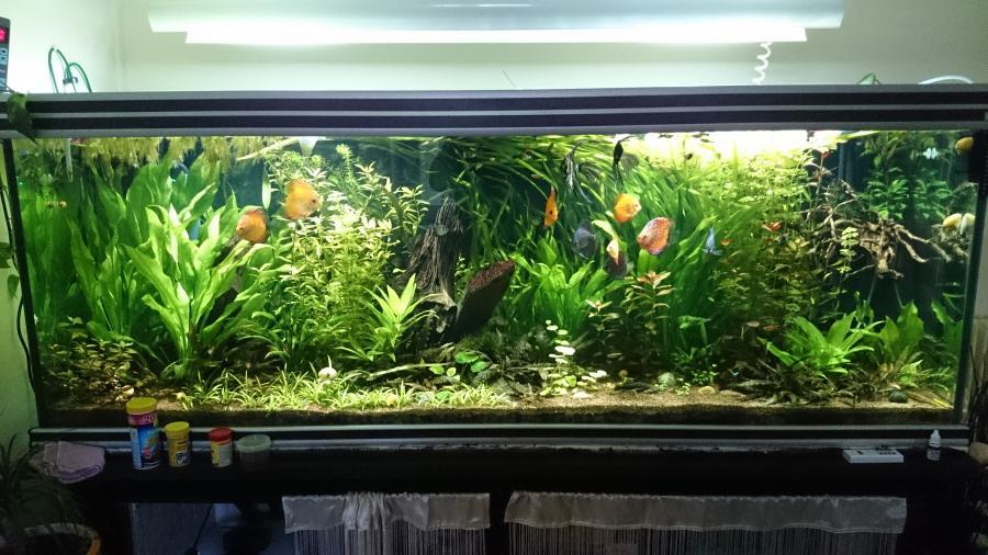Troc Echange Aquarium Eau Douce 850 Litres Sur