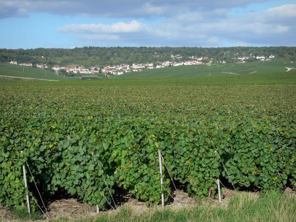 Vignoble Champenois 22 Images De Qualit En Haute Dfinition
