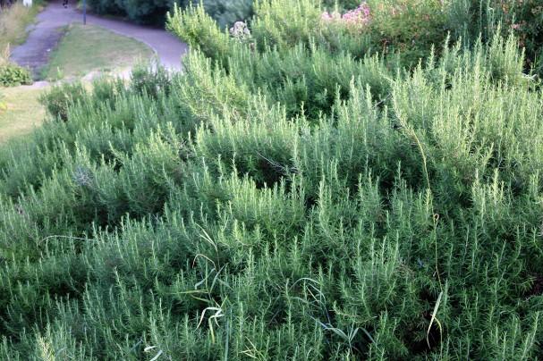 Les Plantes Couvre Sol Secret De Jardinier Malin Blog Conseil Abri Jardin Garage Carport