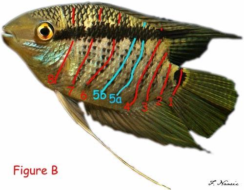 Figure_B